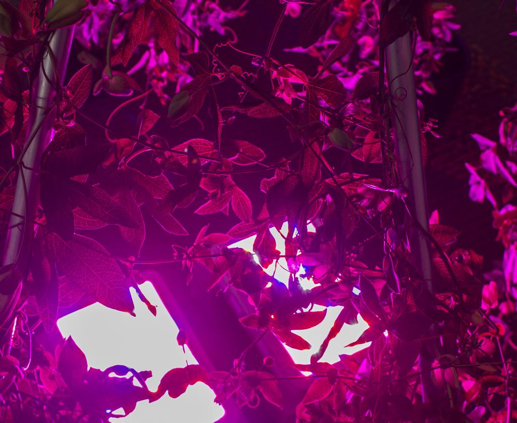Invert Passion Garden